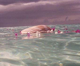Shell-shaped cremation urn floating in water with flower petals